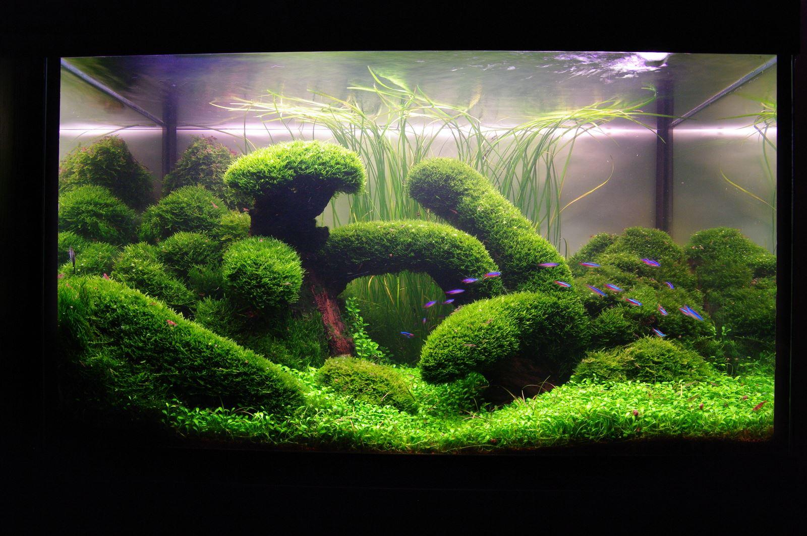 Какие растения можно посадить в аквариум - описание с фото 15