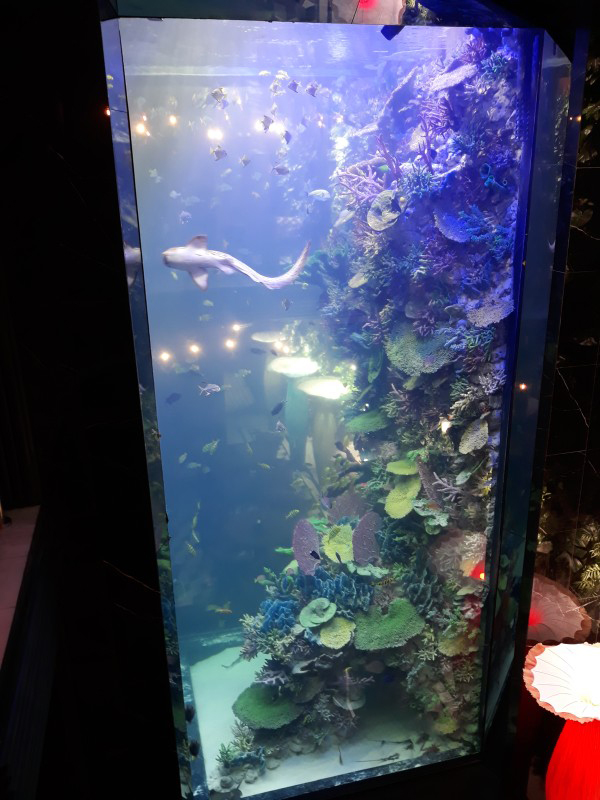 39e4861f91dc9d Найбільший акваріум Львова. - Сторінка 2 - Львівський форум ...